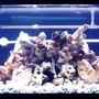 32767 gallons freshwater fish tank (mostly fish and non-living decorations) - 180Gallon Mixed Malawi reef Tank