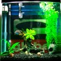 34 gallons freshwater fish tank (mostly fish and non-living decorations) - .