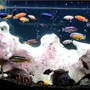 138 gallons freshwater fish tank (mostly fish and non-living decorations) - my 2nd tank. side A