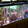 125 gallons freshwater fish tank (mostly fish and non-living decorations) - 125 gallon (back side view)
