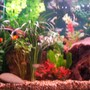 40 gallons freshwater fish tank (mostly fish and non-living decorations) - 66