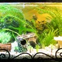 32 gallons freshwater fish tank (mostly fish and non-living decorations) - full view of my aquarium.