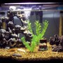 25 gallons freshwater fish tank (mostly fish and non-living decorations) -