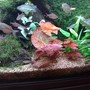 85 gallons freshwater fish tank (mostly fish and non-living decorations) - my red plants