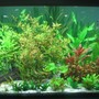 85 gallons freshwater fish tank (mostly fish and non-living decorations) - newly setup aqua