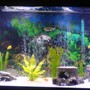 55 gallons freshwater fish tank (mostly fish and non-living decorations) - front view