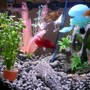 6 gallons freshwater fish tank (mostly fish and non-living decorations) - a wide range of fish