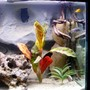 75 gallons freshwater fish tank (mostly fish and non-living decorations) - right side