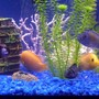 75 gallons freshwater fish tank (mostly fish and non-living decorations) - nice
