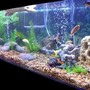 225 gallons freshwater fish tank (mostly fish and non-living decorations) - 225 turtle/fish