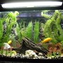 30 gallons freshwater fish tank (mostly fish and non-living decorations) - A 30 gallon freshwater tank with African Malawi Cichlids inside.