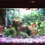10 gallons freshwater fish tank (mostly fish and non-living decorations) - Tetras & Platys