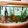 46 gallons freshwater fish tank (mostly fish and non-living decorations) - 46 gallon bowfront Marineland tank ..