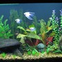 65 gallons freshwater fish tank (mostly fish and non-living decorations) - 65 gallon Angelfish community tank. Acrylic Tank is 4 feet long by 2 feet tall with better lighting