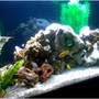 120 gallons freshwater fish tank (mostly fish and non-living decorations) - Angle shot(excuse poor res. used my celphone) My first tank posted...Let me know what you think...