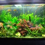 130 gallons freshwater fish tank (mostly fish and non-living decorations) - 100 Gallon Jungle Freshwater Tank.....Please ignore the description below of my reef tank that is on this site too :D