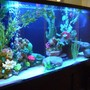 125 gallons freshwater fish tank (mostly fish and non-living decorations) - left view
