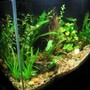 20 gallons freshwater fish tank (mostly fish and non-living decorations) - side view 20 gal