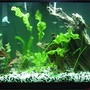 55 gallons freshwater fish tank (mostly fish and non-living decorations) - this is my tank...