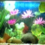 15 gallons freshwater fish tank (mostly fish and non-living decorations) - freshwater tank