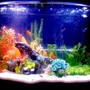 36 gallons freshwater fish tank (mostly fish and non-living decorations) - New 36 Gal Bowfront...