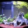 16 gallons freshwater fish tank (mostly fish and non-living decorations) - 16G Bow Front Final Stocking @ 5 Weeks