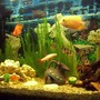 55 gallons freshwater fish tank (mostly fish and non-living decorations) - sevrum and friends