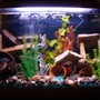40 gallons freshwater fish tank (mostly fish and non-living decorations) - na