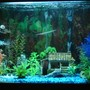 56 gallons freshwater fish tank (mostly fish and non-living decorations) - 56 gal tall fish tank