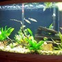 46 gallons freshwater fish tank (mostly fish and non-living decorations) - Tanganyika Community
