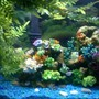 30 gallons freshwater fish tank (mostly fish and non-living decorations) - Colorful Fresh Water Fish Tank