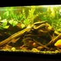 freshwater fish tank (mostly fish and non-living decorations) - 60 gallon mixed fish w/driftwood and fake plants