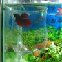 10 gallons freshwater fish tank (mostly fish and non-living decorations) - Betta in a small tank inside main tank.