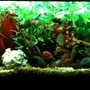 55 gallons freshwater fish tank (mostly fish and non-living decorations) - 55 gallon freshwater community aquarium