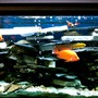 90 gallons freshwater fish tank (mostly fish and non-living decorations) - most aggressive tank ever!