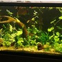 freshwater fish tank (mostly fish and non-living decorations) - 33g guppies and cherry shrimp