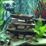 55 gallons freshwater fish tank (mostly fish and non-living decorations) - My 56 Gal Cichlid tank