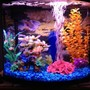 16 gallons freshwater fish tank (mostly fish and non-living decorations) - Full photo of tank