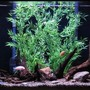 150 gallons freshwater fish tank (mostly fish and non-living decorations) - 150g african cichlid tank
