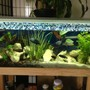 58 gallons freshwater fish tank (mostly fish and non-living decorations) - My cichlid tank