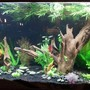 110 gallons freshwater fish tank (mostly fish and non-living decorations)