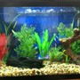29 gallons freshwater fish tank (mostly fish and non-living decorations) - Here it is