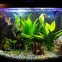36 gallons freshwater fish tank (mostly fish and non-living decorations) - 36 bowfront Freshwater community Tank