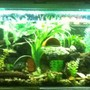 90 gallons freshwater fish tank (mostly fish and non-living decorations) - My 6ft tank