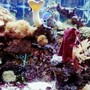 freshwater fish tank (mostly fish and non-living decorations) - 1111 a