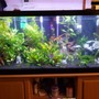 75 gallons freshwater fish tank (mostly fish and non-living decorations) - 2 months in