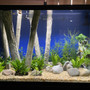 150 gallons freshwater fish tank (mostly fish and non-living decorations) - First large tank (4 Months Old)