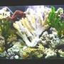 55 gallons freshwater fish tank (mostly fish and non-living decorations) - 55/gl fresh