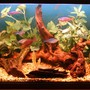 40 gallons freshwater fish tank (mostly fish and non-living decorations) - my tank