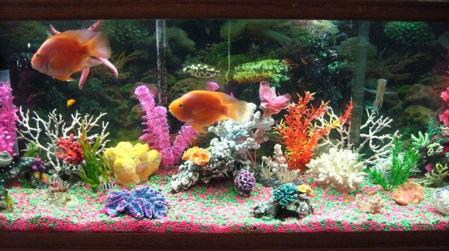 C is 4 cichlid 39 s freshwater tanks photo id 9947 full for 55 gallon aquarium decoration ideas